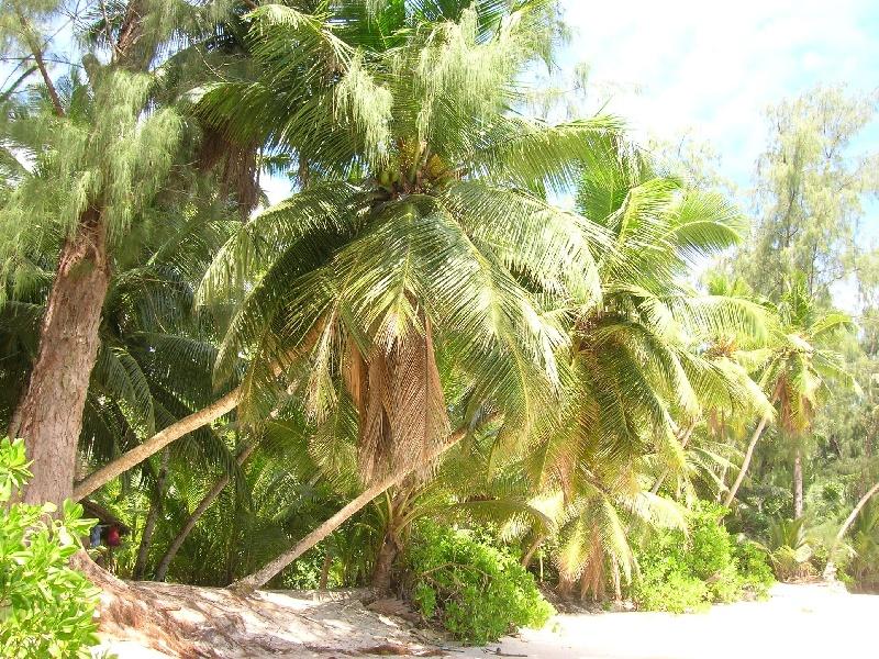 palme-ad-anse-soleil