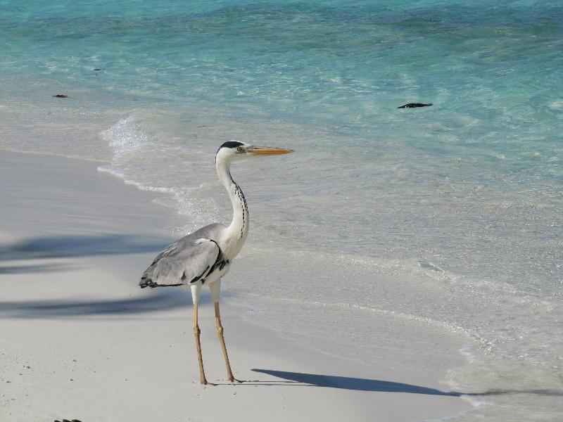 Maldive-2011-816