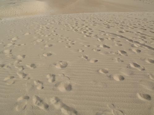 26_Dune_02