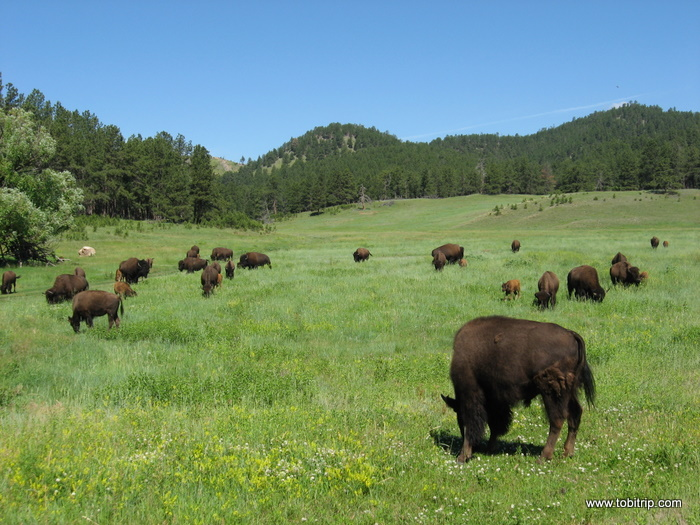 Custer-State-Park2