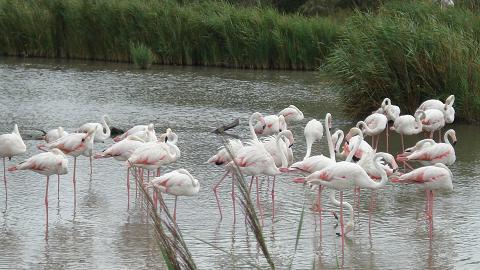 parco-ornitologico