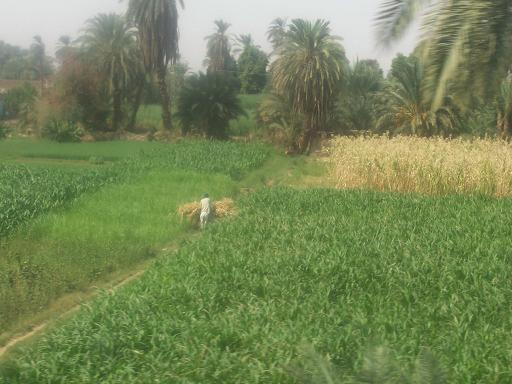Valle-del-Nilo-4