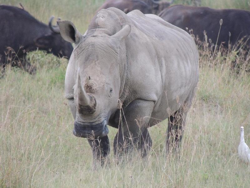 188931-lago-nakuru-rinoceronte