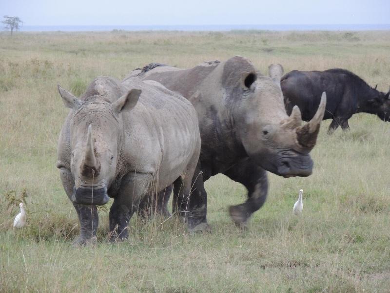 188934-lago-nakuru-rinoceronte