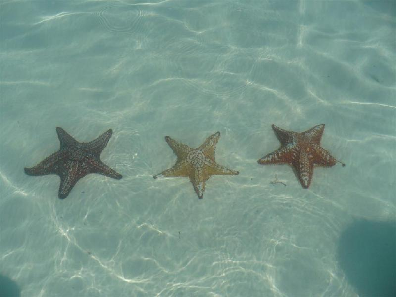 stelle-marine