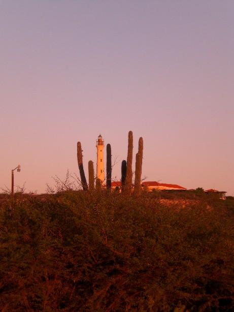 aruba-faro-cactus