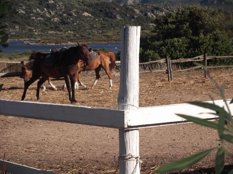 179754-i-nostri-cavalli-per-le