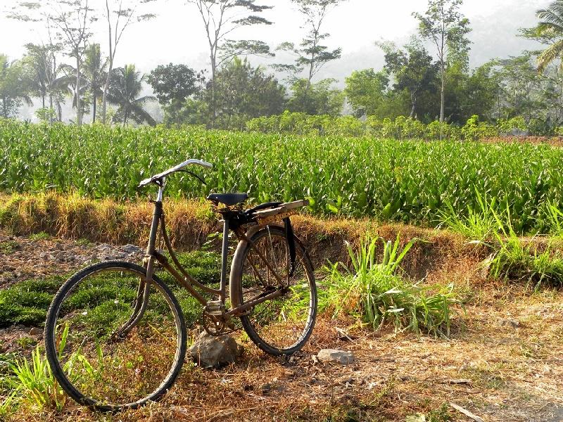72b---giava-in-bici-bici-parch