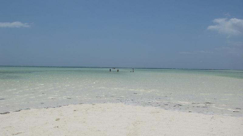 spiaggia-jacaranda