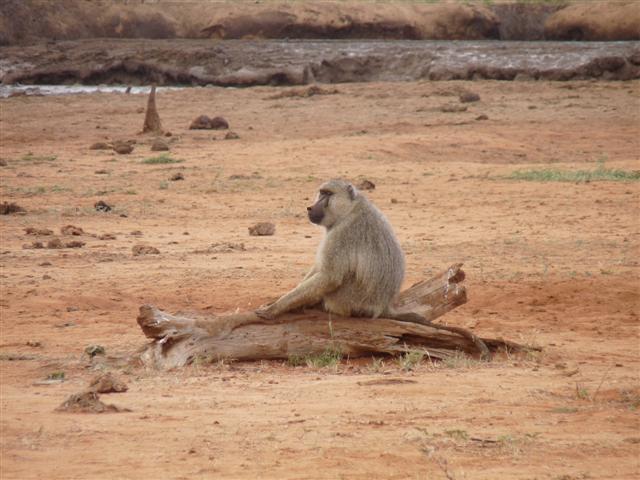 Kenya-marzo-2008-2-036-Small