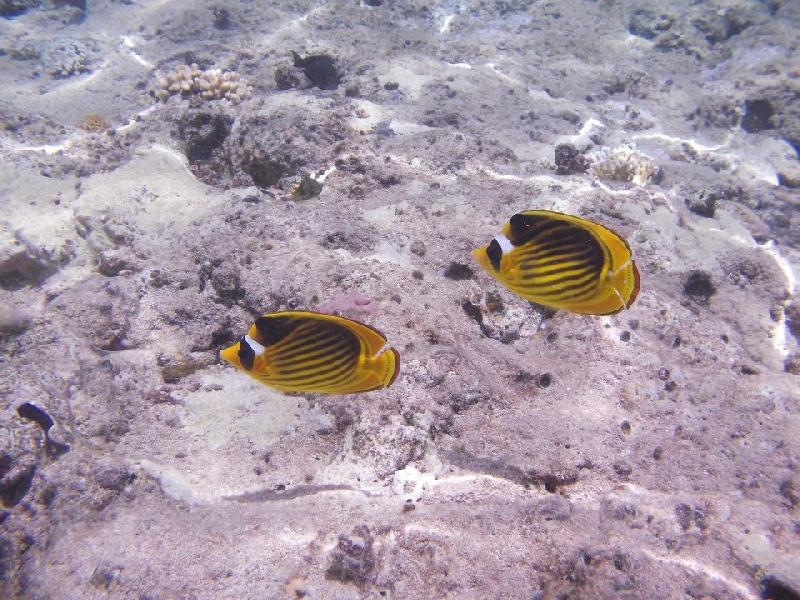 Pesce-3