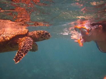sea-turtle-qith-me