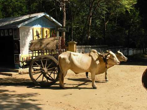 Taxi-birmano
