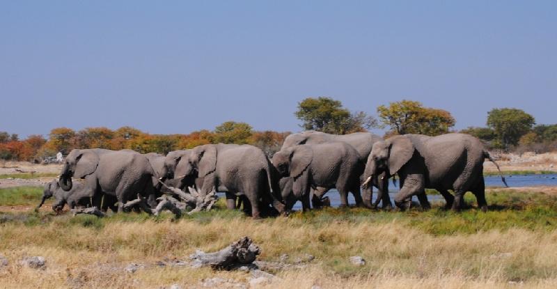 NAMIBIA-2-luisella-167