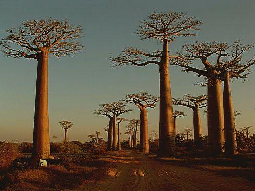 Madagascar087_opt