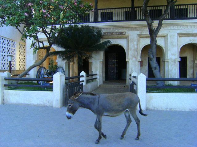 swahili-house-museum