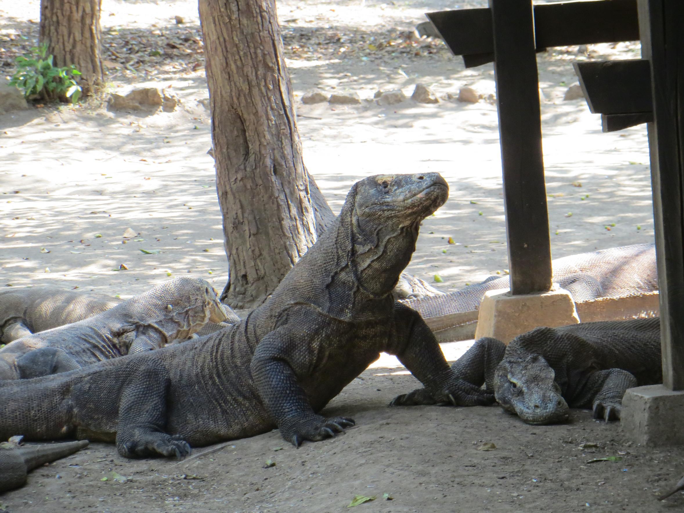Allontanare Lucertole Dal Terrazzo indonesia: una, nessuna, ventimila … isole - il giramondo